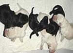 盲導犬繁殖犬ウルミナの子犬たち